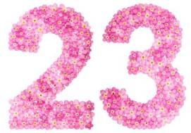 98359072-arabic-numeral-23-twenty-three-from-pink-forget-me-not-flowers-isolated-on-white-background